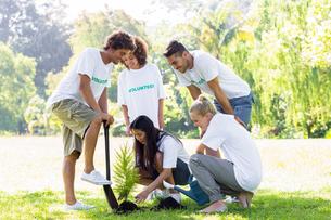 Volunteers planting in parkの素材 [FYI00000374]