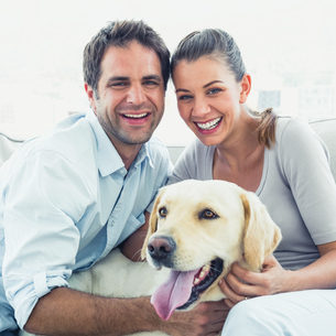 Happy couple petting their yellow labrador on the couchの写真素材 [FYI00001066]