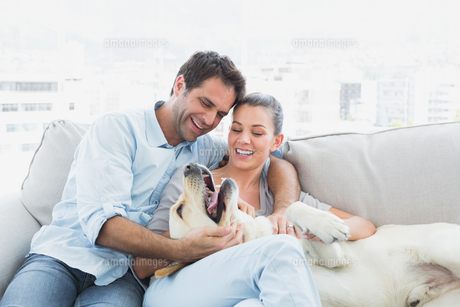 Happy couple petting their yellow labrador on the couchの写真素材 [FYI00001073]