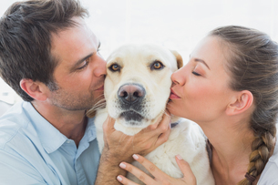 Happy couple kissing their yellow labrador on the couchの写真素材 [FYI00001078]