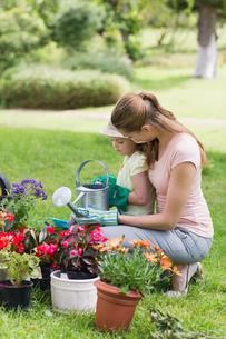 Mother and daughter engaged in gardeningの写真素材 [FYI00001167]