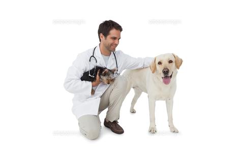 Happy vet posing with yorkshire terrier and yellow labradorの素材 [FYI00001190]