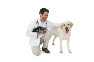 Happy vet posing with yorkshire terrier and yellow labradorの写真素材 [FYI00001190]