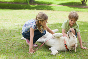 Full length of kids playing with pet dog at parkの写真素材 [FYI00001225]