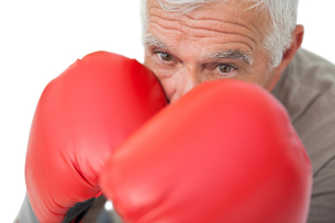 Close-up portrait of a determined senior boxerの写真素材 [FYI00001685]