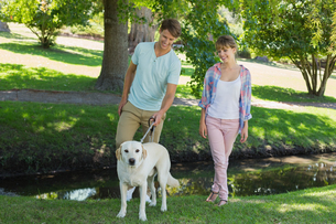 Happy couple walking with their labrador in the parkの写真素材 [FYI00001969]