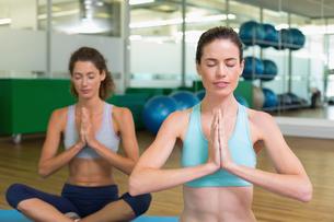 Fit women doing yoga together in studioの写真素材 [FYI00002174]