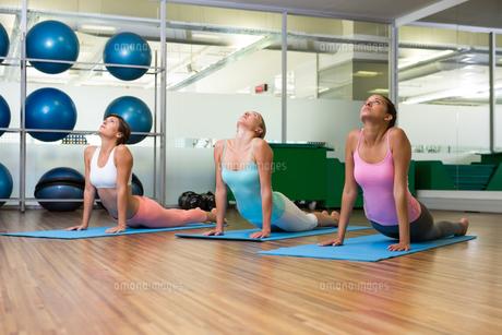 Yoga class in cobra pose in fitness studioの写真素材 [FYI00002553]