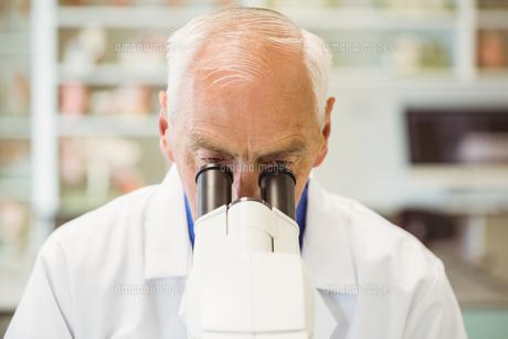Senior scientist working with microscopeの写真素材 [FYI00003661]