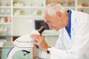 Senior scientist looking through microscopeの写真素材 [FYI00003662]