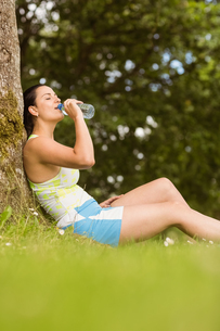 Fit brown hair sitting against tree drinking waterの写真素材 [FYI00003804]