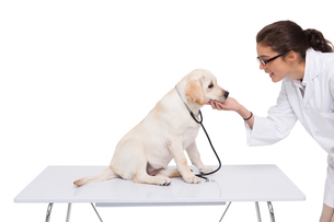 Veterinarian doing check up at a dogの写真素材 [FYI00003923]