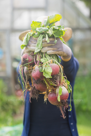 Woman showing home grown vegetablesの写真素材 [FYI00004319]