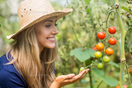 Pretty blonde looking at tomato plantの写真素材 [FYI00004325]