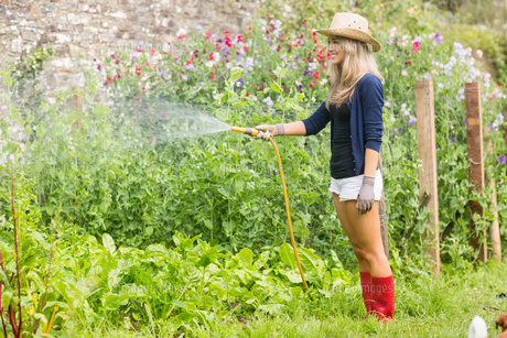 Cute blonde gardening on sunny dayの写真素材 [FYI00004333]