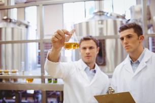Focused scientist team looking at beakerの写真素材 [FYI00004430]