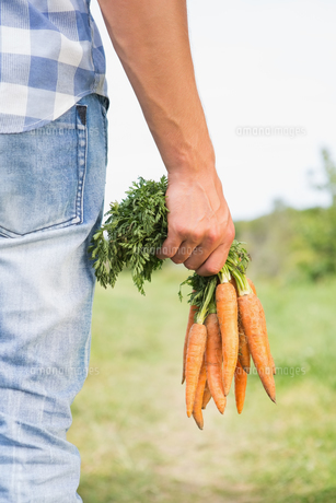 Farmer holding bunch of organic carrotsの写真素材 [FYI00005723]