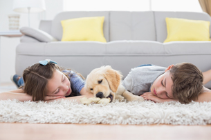 Siblings sleeping with dog on rugの写真素材 [FYI00005871]