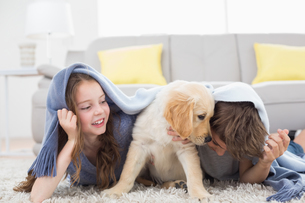 Siblings with puppy under blanket lying on rugの写真素材 [FYI00005877]