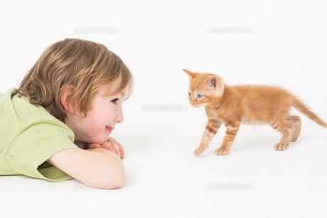 Boy watching kitten walking on white backgroundの写真素材 [FYI00005912]