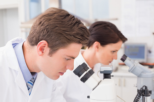Scientists looking attentively in microscopesの写真素材 [FYI00006047]