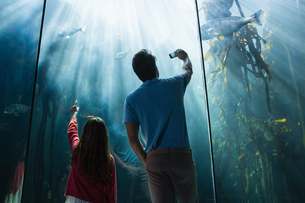 Father and daughter looking at fish tankの写真素材 [FYI00006526]