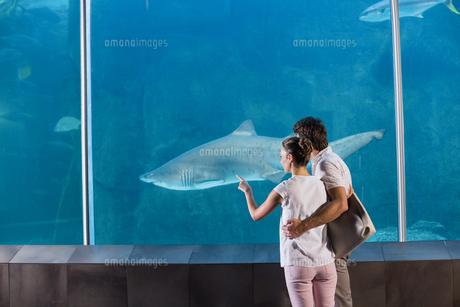 Happy couple looking at sharkの写真素材 [FYI00006527]