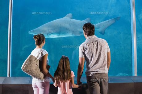 Happy family looking at sharkの写真素材 [FYI00006528]