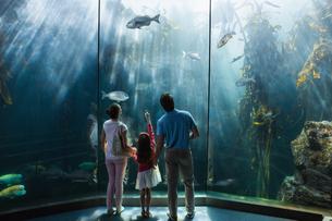 Family looking at fish tankの写真素材 [FYI00006533]