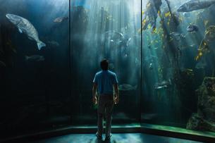 Man looking at fish tankの写真素材 [FYI00006535]