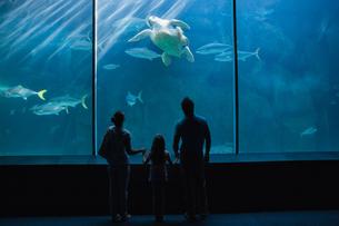Happy family looking at fish tankの写真素材 [FYI00006536]