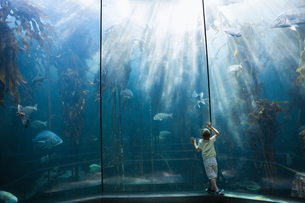 Little boy looking at fish tankの写真素材 [FYI00006603]