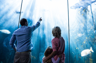 Father pointing a fish while the mother and the daughter looking at fish tankの写真素材 [FYI00006789]