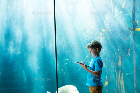 Young man drawing a fish in a tankの写真素材 [FYI00006795]