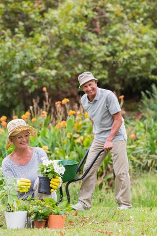 Happy grandmother and grandfather gardeningの写真素材 [FYI00007368]