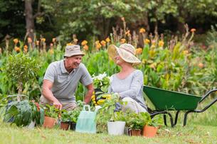 Happy grandmother and grandfather gardeningの写真素材 [FYI00007369]