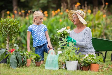 Happy grandmother with her granddaughter gardeningの写真素材 [FYI00007371]