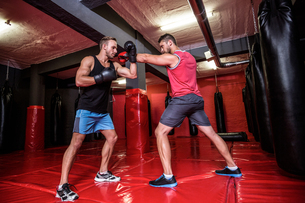 Two boxing men exercising togetherの写真素材 [FYI00009047]