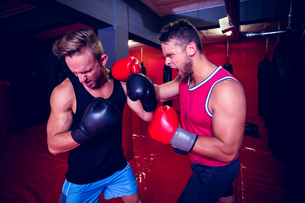 Two boxing men exercising togetherの写真素材 [FYI00009053]
