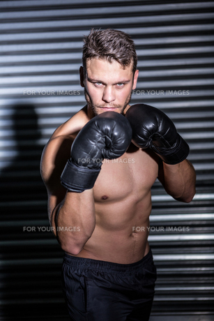 Portrait of serious muscular boxerの写真素材 [FYI00009252]