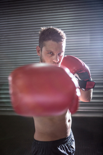 Portrait of serious muscular boxerの写真素材 [FYI00009255]
