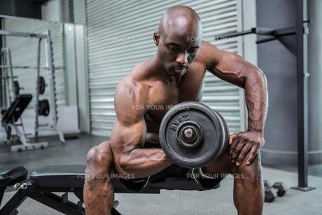 Young Bodybuilder doing weightliftingの写真素材 [FYI00009291]