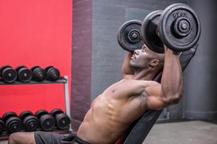 Young Bodybuilder doing weightliftingの写真素材 [FYI00009317]