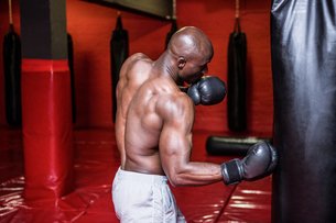 Young Bodybuilder boxing a bagの写真素材 [FYI00009333]