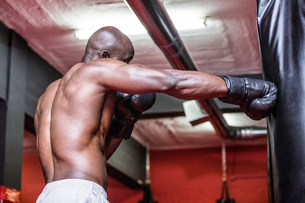 Young Bodybuilder boxing a bagの写真素材 [FYI00009337]