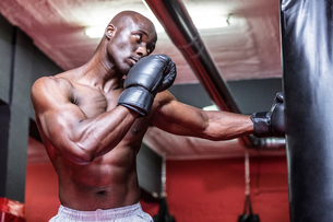 Young Bodybuilder boxing a bagの写真素材 [FYI00009343]
