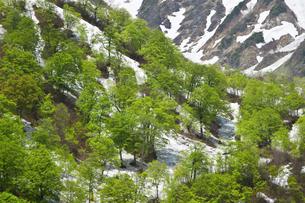 猿倉の残雪と新緑の写真素材 [FYI00023528]