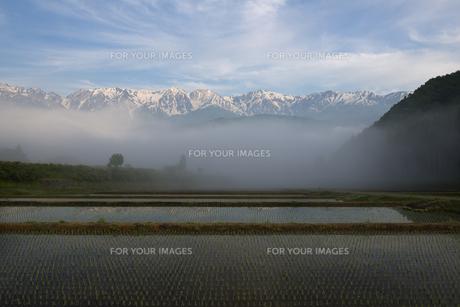 白馬の朝霧晴れゆくの写真素材 [FYI00023533]