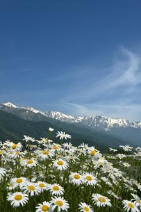 青空に映える白馬連峰とマーガレットの写真素材 [FYI00023534]