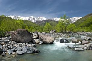 新緑の松川と白馬連峰の写真素材 [FYI00023542]